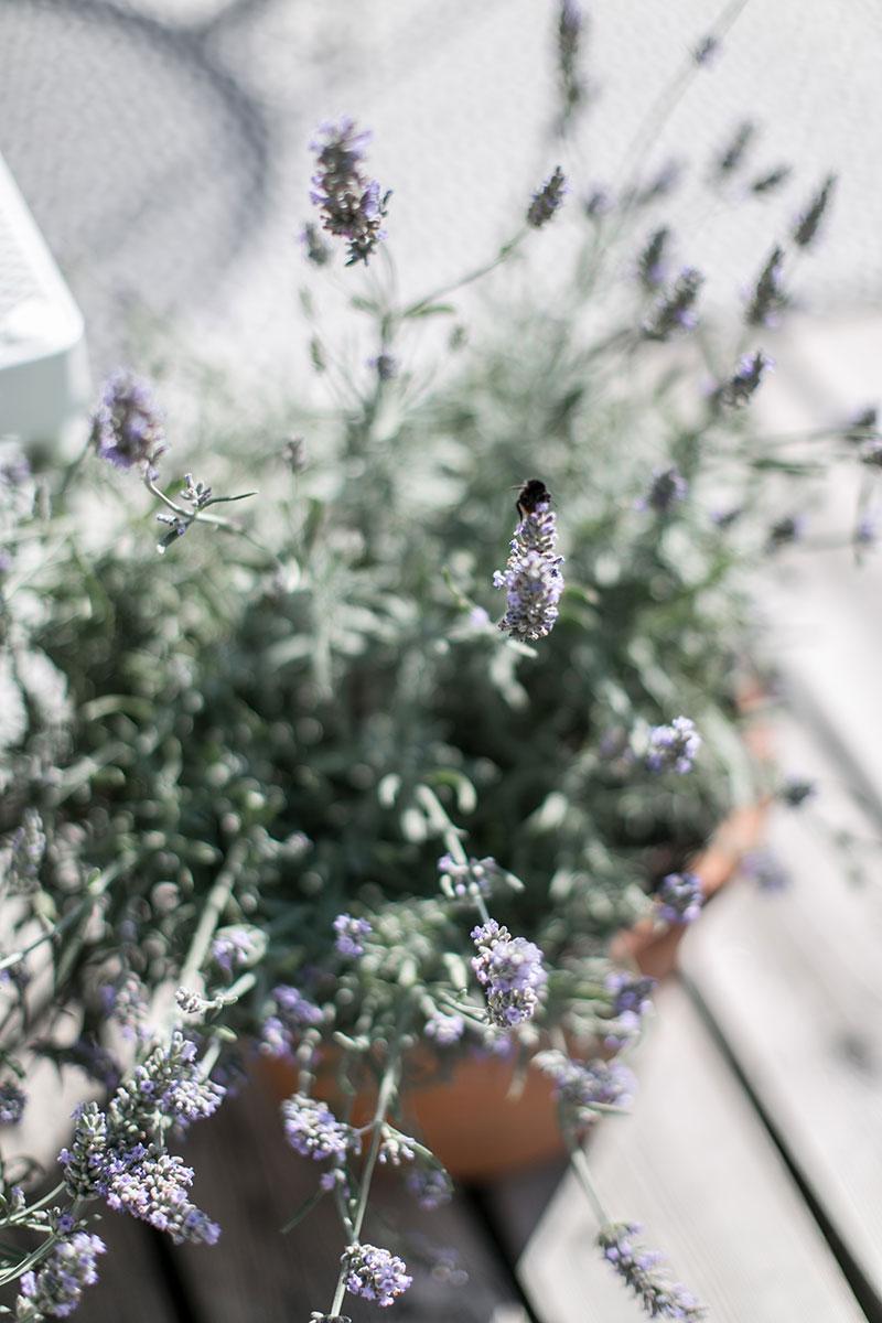 Kräuter trocknen und einfrieren – Aroma einfangen